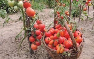 Польза помидоров беременным