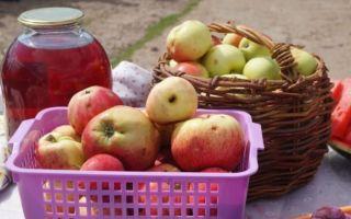 Польза сахарного яблока
