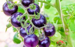 Вся польза помидоров