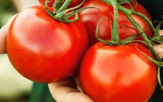Сок помидора польза