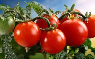 Какая польза от помидор