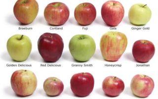 Польза от печеных яблок