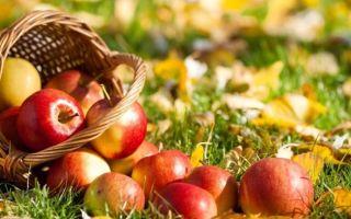 Яблоки железо польза