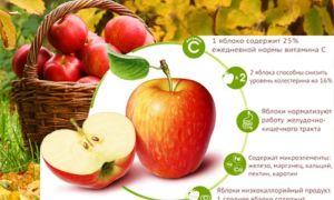 Польза натуральных яблок
